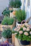 淡紫色、石南花、迷迭香和菊花灌木在罐 免版税库存照片