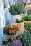 淡紫色、石南花、迷迭香和菊花灌木在罐 库存照片