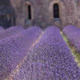 淡紫色修道院在Senanque,普罗旺斯,法国 免版税库存图片