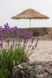 淡紫色和伞 库存图片