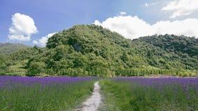 淡紫色在山的淡紫色有很多 库存图片