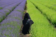 淡紫色在新疆 库存图片