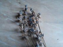 淡紫色在白色背景的花花束 库存照片
