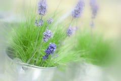 淡紫色小树枝 免版税库存照片