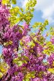 淡紫色开花在多瑙河公园,维也纳,奥地利 库存照片