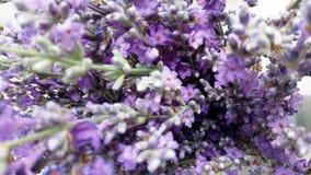 淡紫色开花特写镜头有被弄脏的背景 免版税库存照片