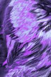 淡紫色抽象的羽毛 免版税图库摄影