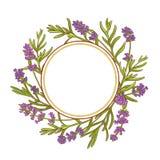 淡紫色植物传染媒介框架 免版税库存照片