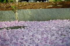 淡紫色残骸 库存图片