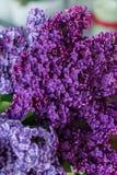 淡紫色特写镜头花束  库存图片