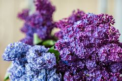 淡紫色特写镜头花束  图库摄影