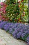 淡紫色玫瑰 库存照片