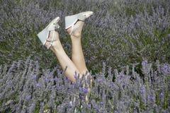 淡紫色的领域在梅菲尔德淡紫色农场的萨里的击倒一个女孩的腿用一根美丽的修指甲棍子在灌木外面 库存图片
