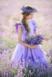 淡紫色的领域的美丽的女孩在日落的 免版税库存照片