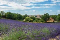 淡紫色看法在背景中调遣在晴朗的蓝天和Valensole镇下  免版税库存照片