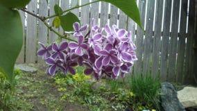 淡紫色结构树 库存图片
