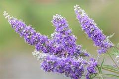 淡紫色花在草甸 免版税库存图片