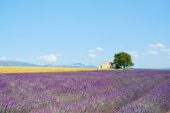 淡紫色花田,房子,结构树。 普罗旺斯 免版税图库摄影