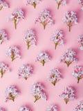 淡紫色花纹花样 免版税库存图片