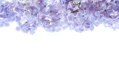 淡紫色花边界 紫色花花束在白色背景被隔绝 看法从上面,平的位置概念 图库摄影