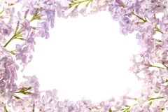 淡紫色花边界 紫色花花束在白色背景被隔绝 看法从上面,平的位置概念 免版税库存图片