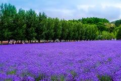 淡紫色花,与人和家庭travelingÂ在庭院里 图库摄影