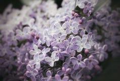 淡紫色花 图库摄影