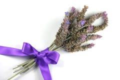 淡紫色诗句 库存图片