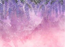 淡紫色金合欢开花背景 库存照片