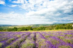 淡紫色领域和农场晴天在风暴前,传统普罗旺斯农村风景与花和蓝天,广角coun 图库摄影