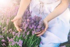 淡紫色领域和女性手 库存图片