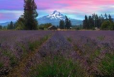 淡紫色领域在日落以后的Hood河俄勒冈 库存照片