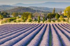淡紫色领域在普罗旺斯 库存照片