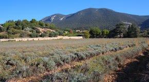 淡紫色领域在Luberon地区在法国 免版税库存图片