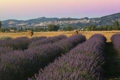 淡紫色领域美妙的看法在日落的在阿西西 图库摄影