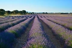 淡紫色领域,在布里韦加,瓜达拉哈拉,西班牙附近的夏天风景 库存图片