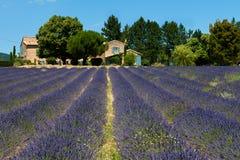 淡紫色领域(熏衣草属angustifolia) 免版税库存图片