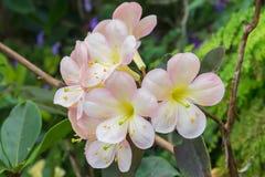 淡色花在庭院里 库存图片