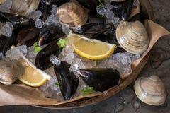 淡菜和蛤蜊在冰 免版税库存照片