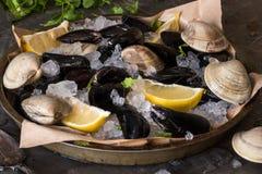 淡菜和蛤蜊在冰 免版税库存图片