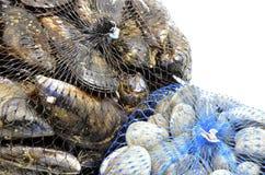 淡菜和蛤蜊详细资料  免版税库存照片