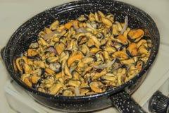 淡菜在煎锅被烹调 免版税图库摄影