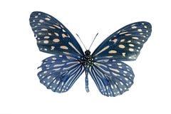 淡蓝的老虎蝴蝶(Tirumala limniace)在原色印刷我 库存图片