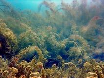 淡水水下的场面淡水鱼河和湖 库存图片