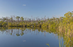 淡水池塘在热带 图库摄影