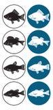 淡水的鱼 免版税库存图片