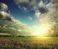 淡紫色、麦子和鸦片的领域 免版税库存照片