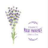 淡紫色典雅的卡片 库存照片