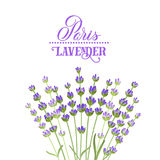 淡紫色典雅的卡片 库存图片