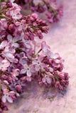淡紫色分支 库存图片